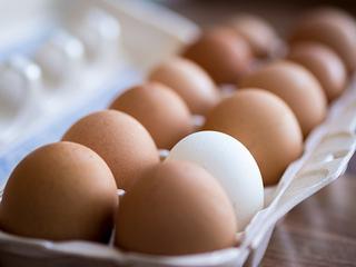 Depiction of USP: White egg among brown eggs